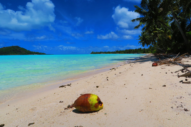 Motu Auira Maupiti French Polynesia coconut on tropical beach