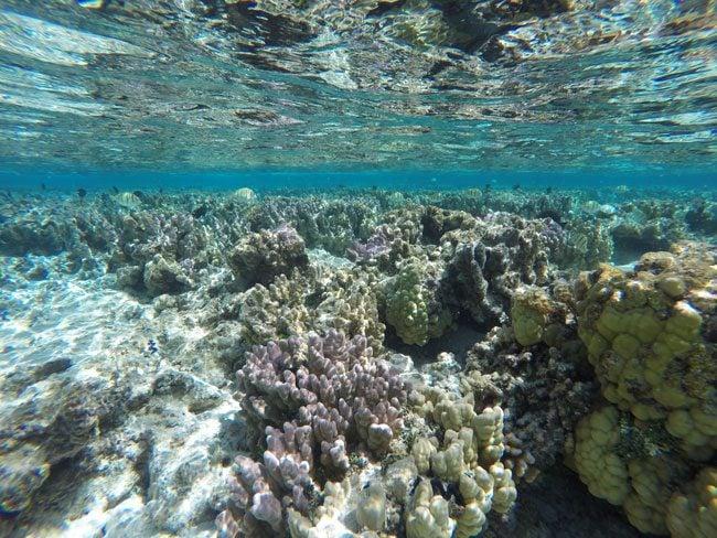 Snorkeling off Motu Auira Maupiti French Polynesia 3