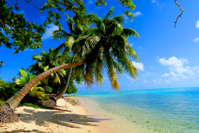 Avea Bay tropical beach Huahine Island French Polynesia palm tree