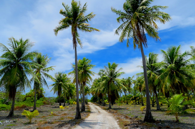 Dirt road Fakarava Atoll French Polynesia