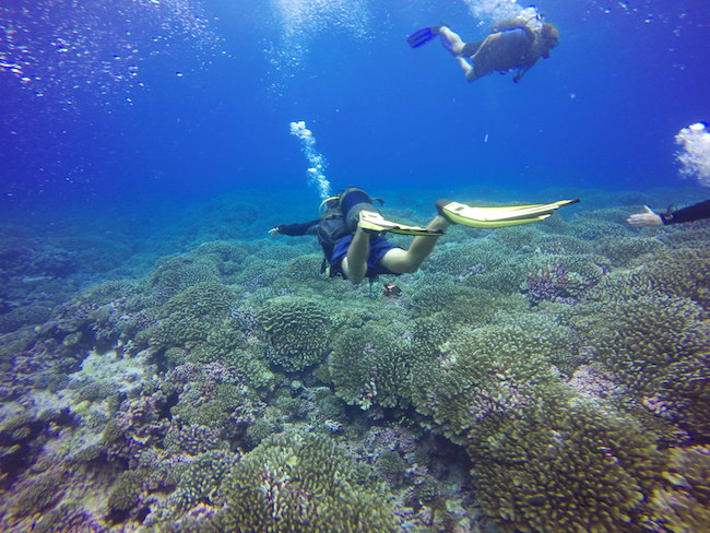 Diving Fakarava Atoll French Polynesia North Pass Garuae Ohotu Cliff drift