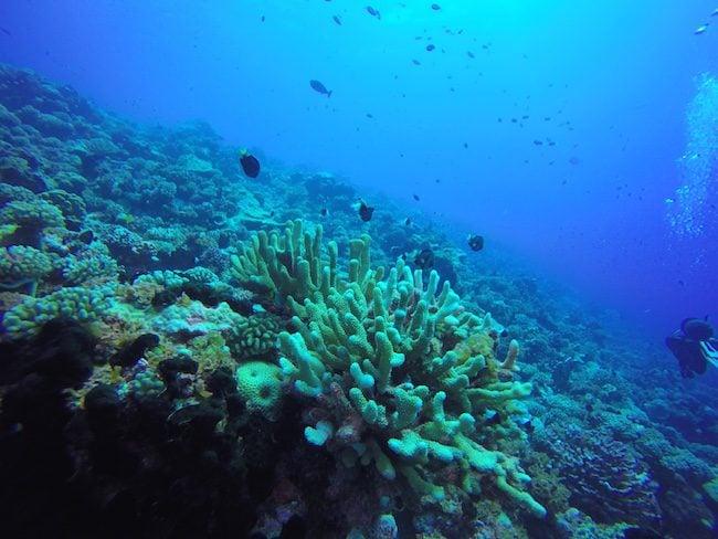 Diving Fakarava Atoll French Polynesia North Pass Garue Ohotu Cliff