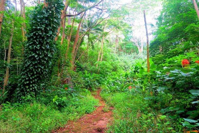 Hana Iti hike Huahine Island French Polynesia walking through forest