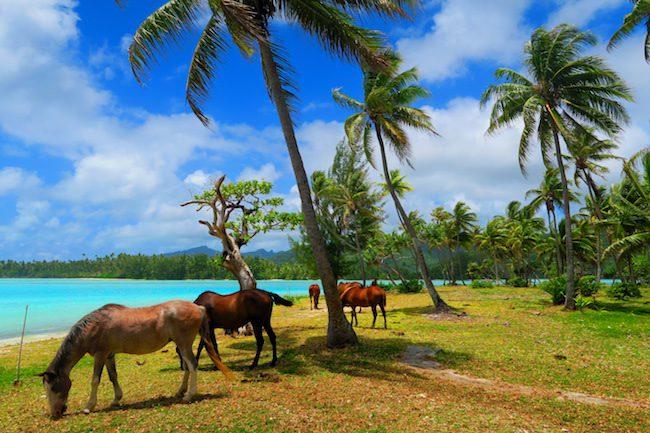 Horses in la cite de corail beach Huahine Island French Polynesia