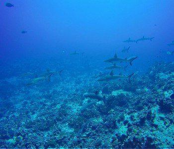Living A Fantasy In The Fakarava Atoll