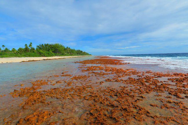 Ocean side Fakarava Atoll French Polynesia