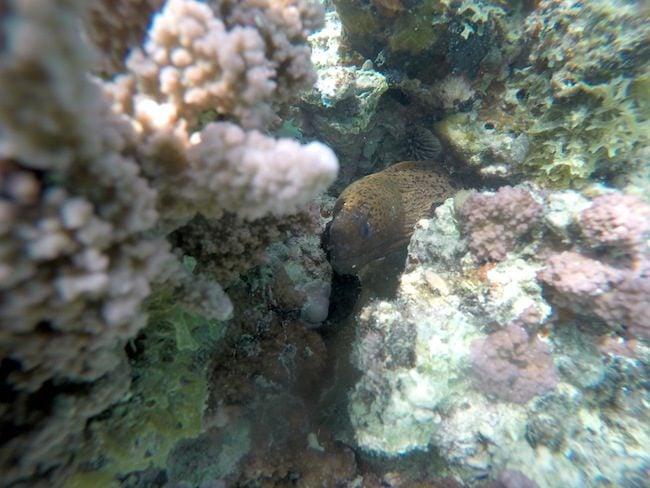 Snorkeling Hana Iti Beach Huahine Island French Polynesia moray eel