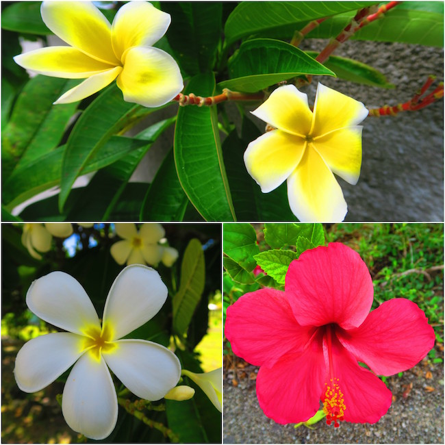 Tropical flowers in Fakarava Atoll French Polynesia