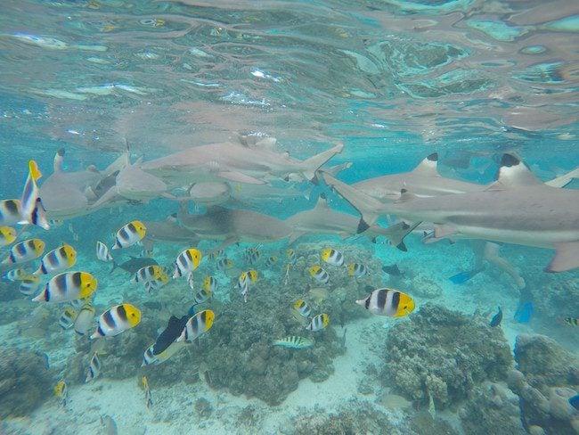 lagoon tour Huahine Island French Polynesia snorkeling