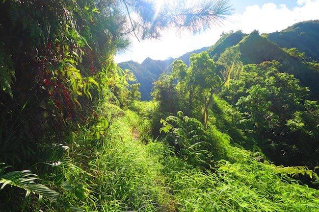 Mount Aorai Hike Tahiti French Polynesia - into forest