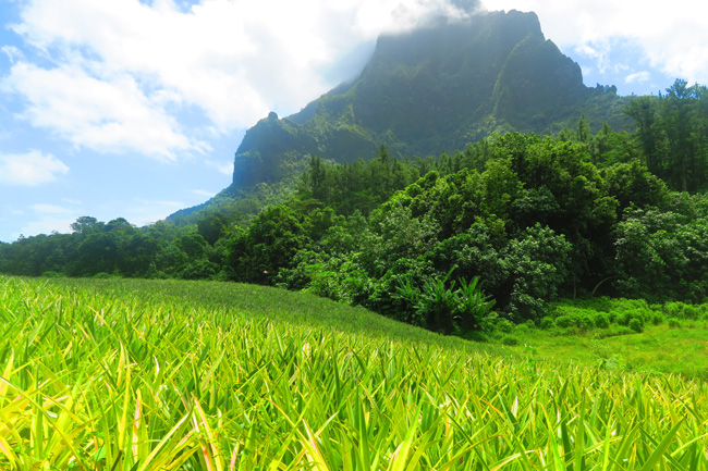 Pineapple Route - Moorea French Polynesia - Mount Rotui pineapple fields