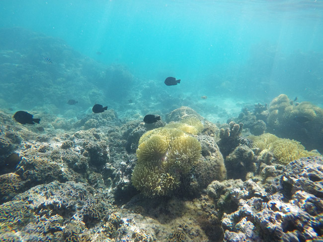 Snorkeling Avea Bay - Huahine French Polynesia