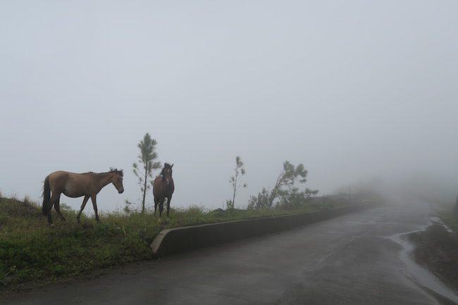 nuku hiva marquesas islands wild horses on road