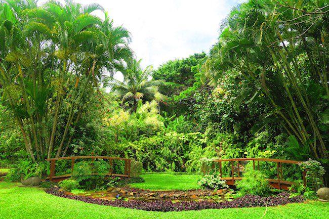 Maire Nui Botanical Gardens rarotonga cook islands