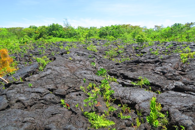 Saleaula Lava Field Savaii island samoa