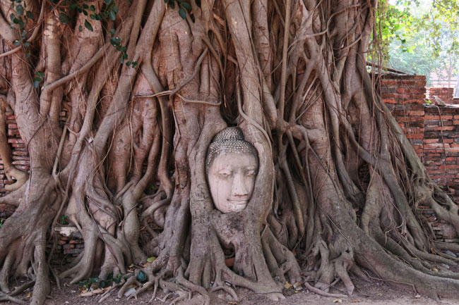 ayutthaya-thailand-buddha-head-stuck-in-tree