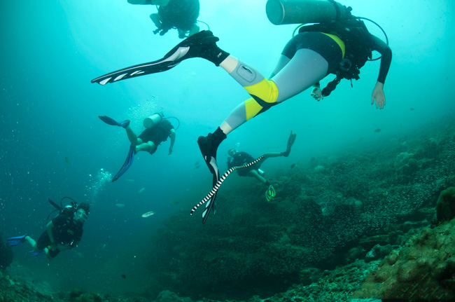 diving-ko-haa-in-thailand-sea-snake