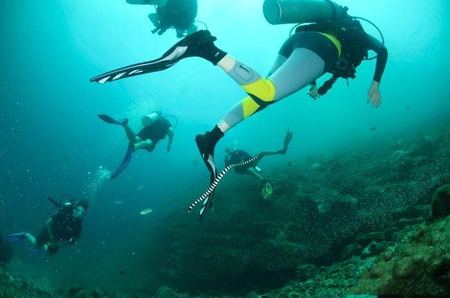 diving-ko-haa-in-thailand-sea-snake