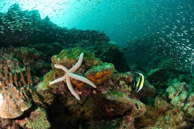 diving-ko-haa-in-thailand-starfish