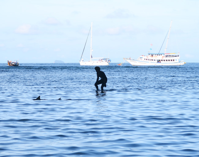 maya-bay-ko-phi-phi-leh-catching-sharks
