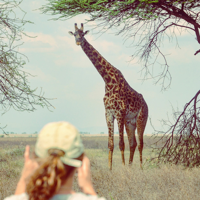 giraffe-in-serengeti