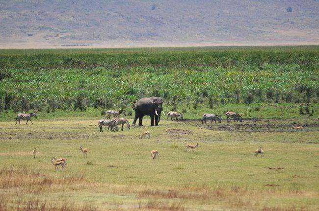 safari-in-ngorongoro-tanzania
