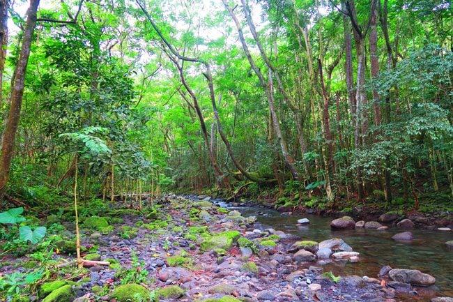 Hiking in Waipio Valley to Hiilawe Falls - Big Island Hawaii