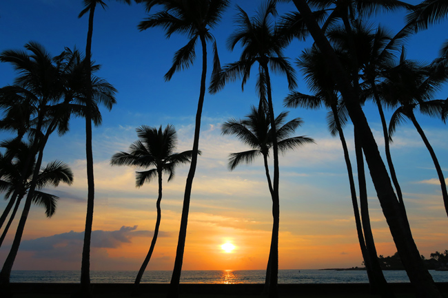Kona Hawaii - Palm Trees sunset