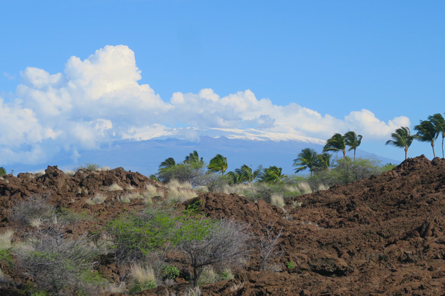 Palm-trees-and-Snow-capped-mountain-Big-Island-Hawaii