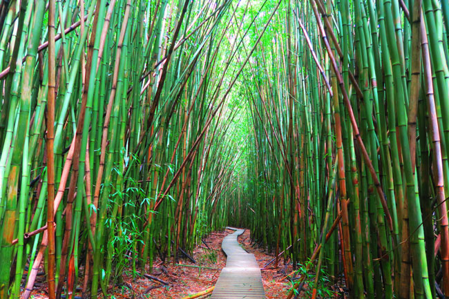 Pipiwai Trail Hike Bamboo Forest - Road to Hana - Maui Hawaii