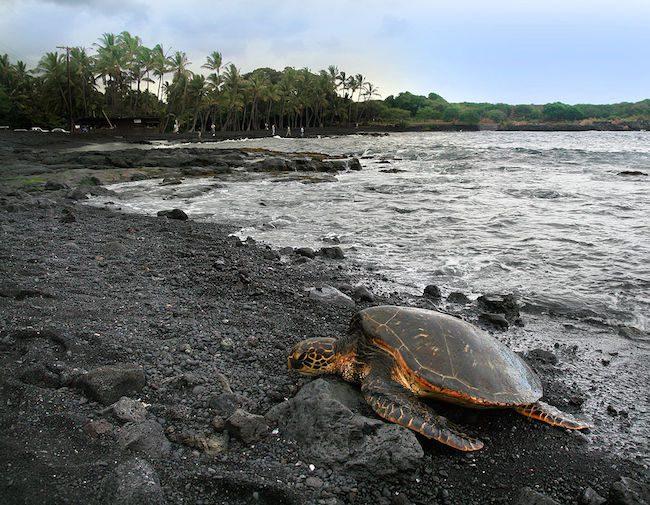 Punalu'u Black Sand Beach - Big Island Hawaii