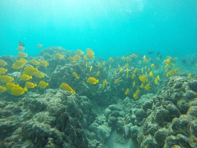 Snorkeling Two Step Beach - Big Island Hawaii