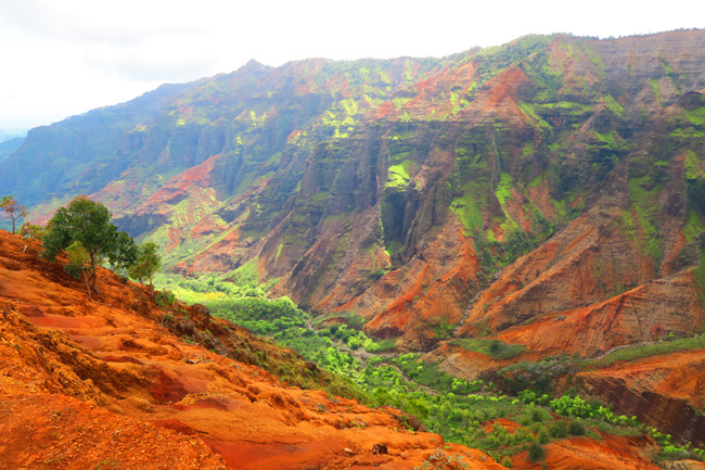 Waimea Canyon from Cliff and canyon hiking trail - Kauai Hawaii_2