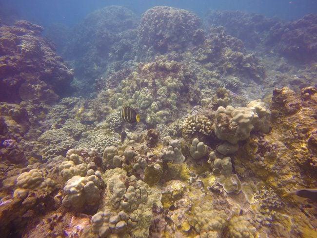 Honolua - Maui - Hawaii - Snorkeling