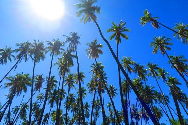 King Kamehameha Coconut Grive - Molokai - Hawaii