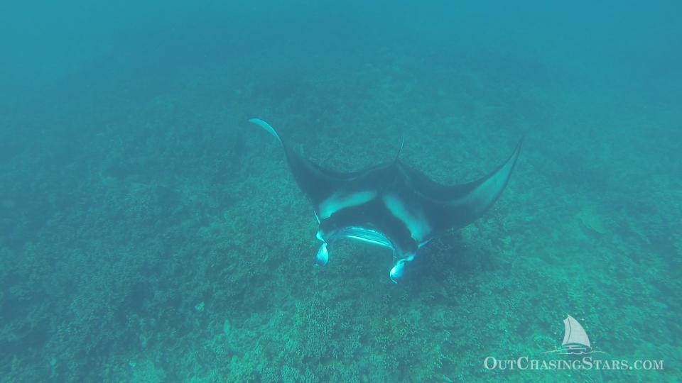 Manta rays in Bora Bora - Starry Horizons