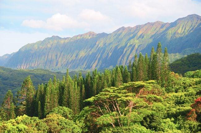 Pali Cliffs - Oahu - Hawaii
