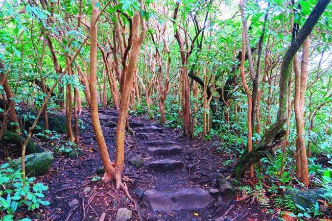 Pipiwai Trail - Hiking through rainforest - Maui - Hawaii