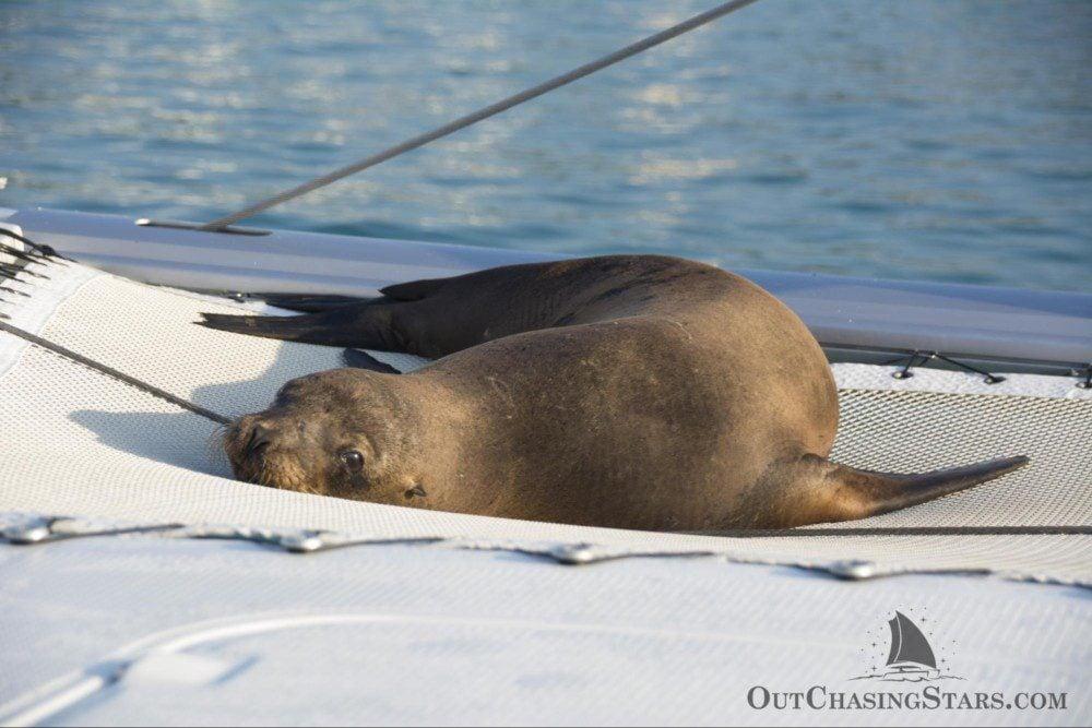 Starry Horizons - Galapagos sea lion