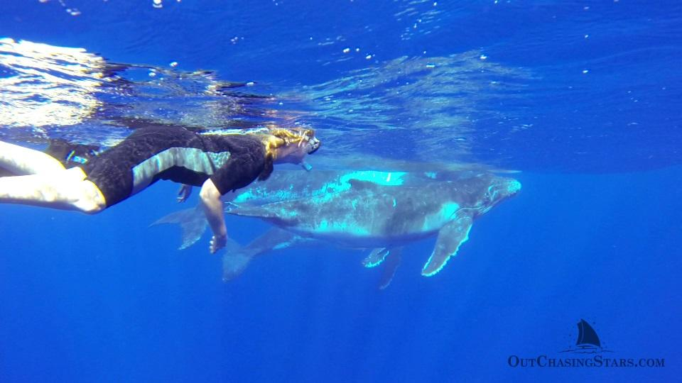 Starry Horizons - swimming with whales