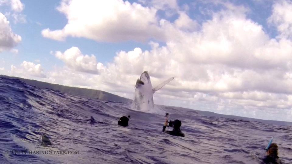 Starry Horizons - whale breaching