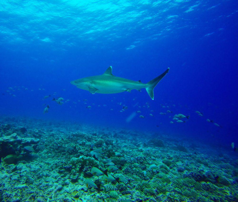 צלילה ברנגירואה - טהיטי - פולינזיה הצרפתית