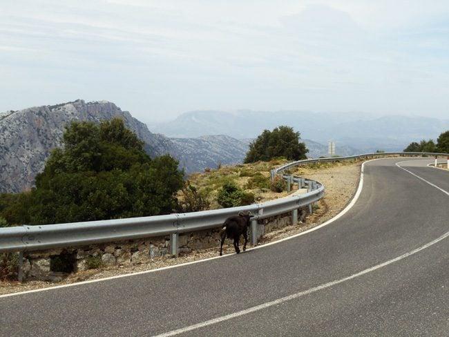 scenic country road - Sardinia - Italy