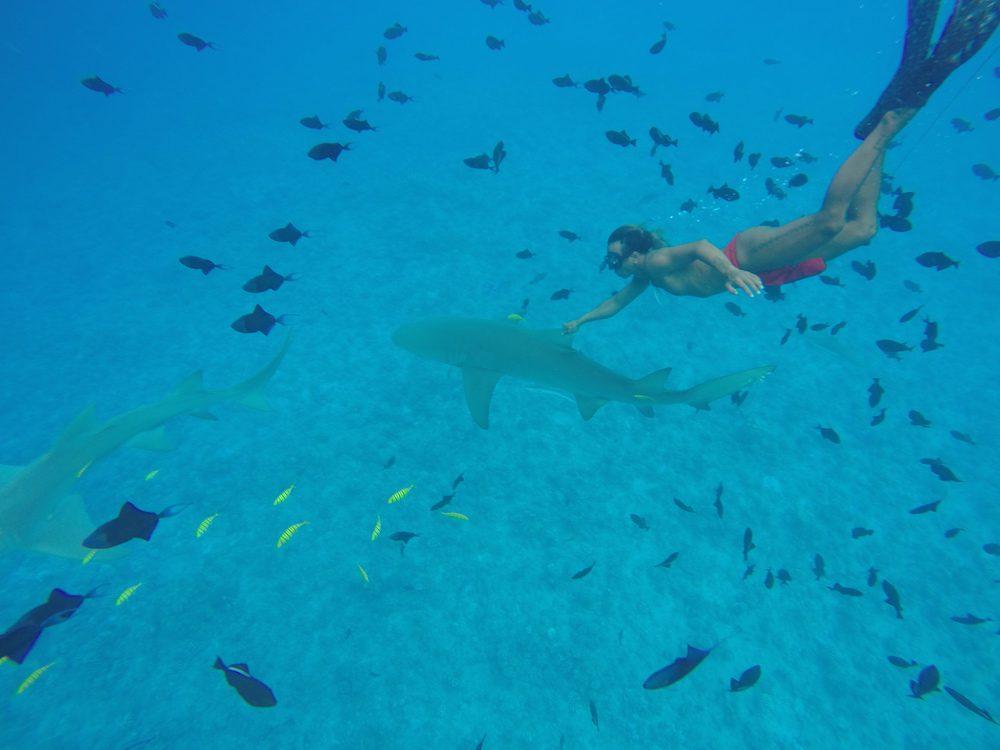 שחייה עם כרישים בורה בורה - פולינזיה הצרפתית