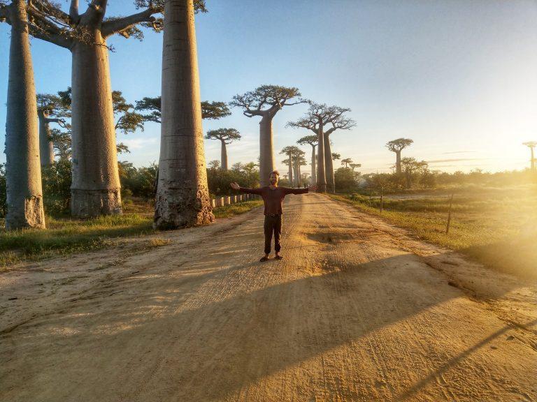 Madagascar baobab Avenue - Vagabjorn