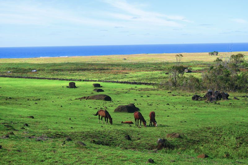 Horseback riding Easter Island