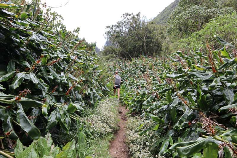 Fenetre des Makes hike - Reunion Island - tropical field
