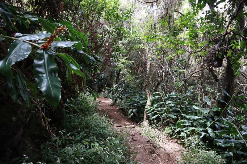 Fenetre des Makes hike - Reunion Island - tropical forest
