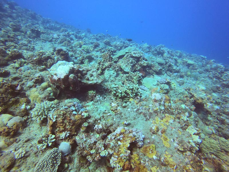 Scuba diving Reunion Island - reef