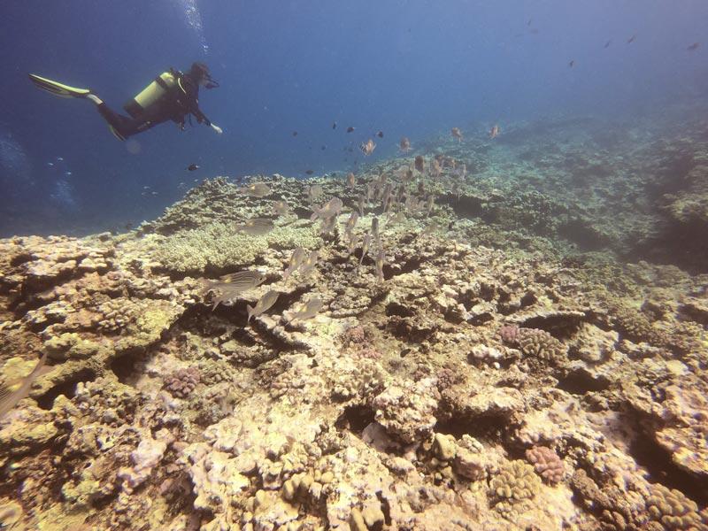 Scuba diving Reunion Island
